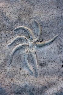 StarfishPost